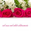 Red roses and white Alstroemeria — Stok Fotoğraf #9390503