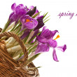 Spring crocus — Stock Photo #9390905