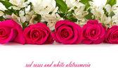 Kırmızı güller ve beyaz alstroemeria — Stok fotoğraf