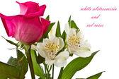 červené růže a bílých kosatců — Stock fotografie