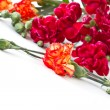 Bouquet of red carnations - Stock Photo