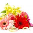 Gerbera — Stock Photo #9834222