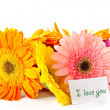 Bunch of different colored gerbera — Stock Photo