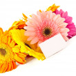Stock Photo: Bunch of different colored gerbera
