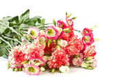 Bouquet of pink carnations and lisianthus flowers — Stock Photo