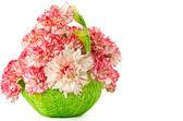Blooming pink carnation — Stock Photo