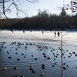 Duck pond in the ice - Stock Photo