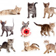 Stock Photo: Funny kittens set isolated on white