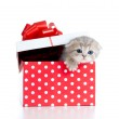 Funny baby cat in red gift box — Stock Photo