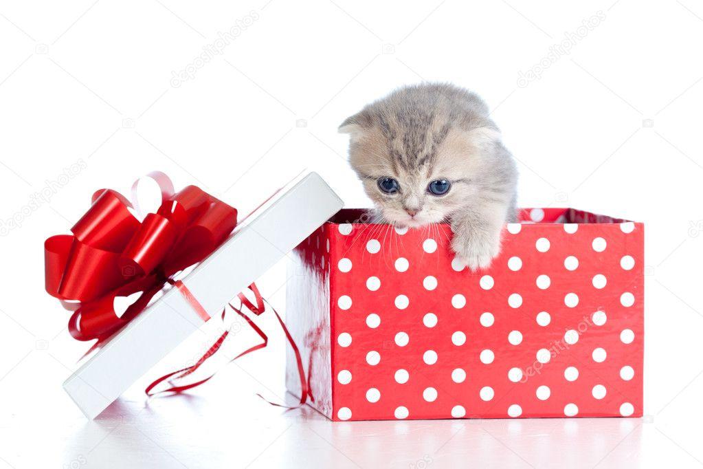 Что подарить котенку на день рождения своими руками