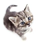Little baby kitten looking upwards top view — Stock Photo