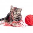 Nice tabby kitten playing red clew or ball — Stock Photo