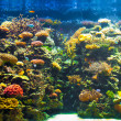 Big aquarium panorama - Stock Photo