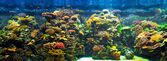 Big aquarium panorama — Stock Photo