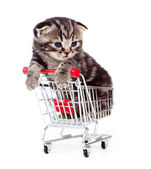 Little kitten sitting in shopping cart isolated on white — Stock Photo