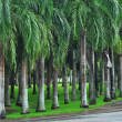 Neat rows of palm trees in city park — Stock Photo