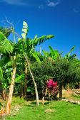 Palm-trees — Stock fotografie