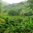 Stock Photo: Jungle at DominicRepublic