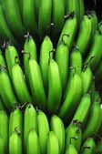 Haste de bananas na árvore — Fotografia Stock