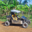 Buggy on the track of Tropical — Stock Photo #9782275