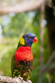 Pájaro adorable loro — Foto de Stock