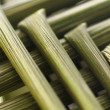 Macro wheat stem — Stock Photo