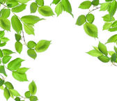 Background from green leaves — Stock Photo