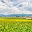 Spring Farmland — Stock Photo
