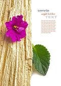 Květ s listy na dřevo — Stock fotografie