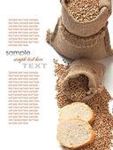 Brot und getreide — Stockfoto