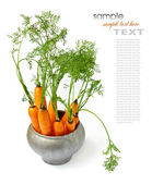 Carrots with green tops — Stock Photo
