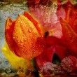 Vintage tulips with water droplets — Stock fotografie