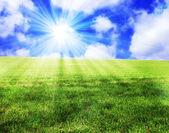 Sunny landscape — Stockfoto