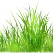 Grass in sunlight — Stock Photo