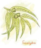 Ramo de eucalipto. estilo aquarela. — Vetor de Stock