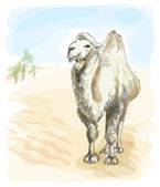 Camel Bactrian. Watercolor style. — Stockvector