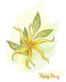 Tropikalny kwiat - ylang-ylang (cananga). — Wektor stockowy