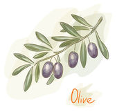 Branch of black olives. Watercolor style. — Stock Vector