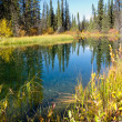 Fall sky mirrored on calm clear taiga wetland pond - Foto de Stock