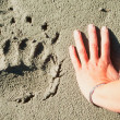 Royalty-Free Stock Photo: Grizzly bear track and human hand.