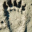 Stock Photo: Grizzly bear track in soft mud.
