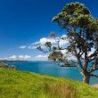Coastal Farmland Landscape with Pohutukawa Tree - Stock Photo