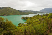 Kenepuru Sound of Marlborough Sounds, New Zealand — Stock Photo