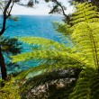 Subtropical forest of Abel Tasman NP, New Zealand — Stock Photo