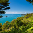 Subtropical forest of Abel Tasman NP, New Zealand - Stock Photo
