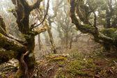 Virgin mountain rainforest of Marlborough, NZ — Stock Photo