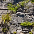Pioneer plants in Pancake Rocks of Punakaiki, NZ - Stock Photo