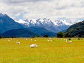 Aoraki, Mt Cook highest peak of Southern Alps, NZ — Stock Photo