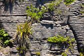 растений-пионеров в скалах блин punakaiki, nz — Стоковое фото