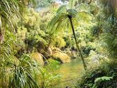 Exuberante selva verde a lo largo del río pororai, nz — Foto de Stock